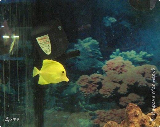 """Мой первый фоторепортаж о том, как мы всей семьёй ходили в развлекательный центр Планета. Там мы случайно увидели выставку морских рыб. Мне очень понравилась выставка. Я таких рыб видела только в книжке. Это рыба-Клоун. Я про него смотрела мультфильм """"В поисках Немо"""".  фото 13"""