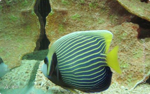 """Мой первый фоторепортаж о том, как мы всей семьёй ходили в развлекательный центр Планета. Там мы случайно увидели выставку морских рыб. Мне очень понравилась выставка. Я таких рыб видела только в книжке. Это рыба-Клоун. Я про него смотрела мультфильм """"В поисках Немо"""".  фото 14"""