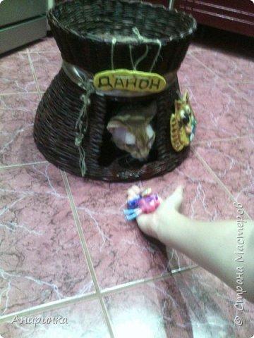 Вот и у меня положено начало кошаче-собачьему ДОМОплетению :))) фото 8