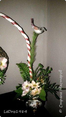 Очередной топиарий гнездо фото 3