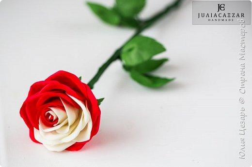 Пошаговый фото мастер-класс по созданию двухцветной розы из фоамирана. Содержит выкройку, 75 пошаговых фото по обработке лепестков и сборке цветка.  В формате PDF.  Мастер-класс в формате PDF.  фото 2