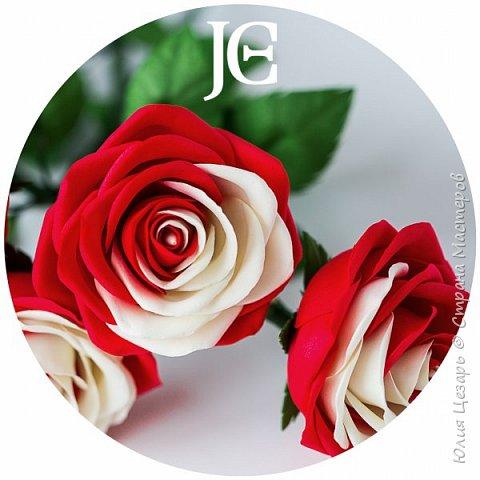 Пошаговый фото мастер-класс по созданию двухцветной розы из фоамирана. Содержит выкройку, 75 пошаговых фото по обработке лепестков и сборке цветка.  В формате PDF.  Мастер-класс в формате PDF.  фото 1