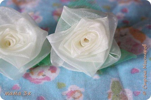 ах, эти розы... фото 1