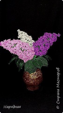 Тюльпаны и мимоза фото 2