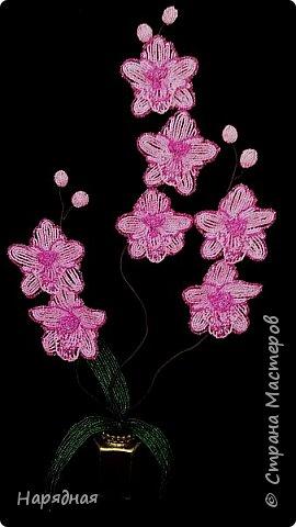 Тюльпаны и мимоза фото 3