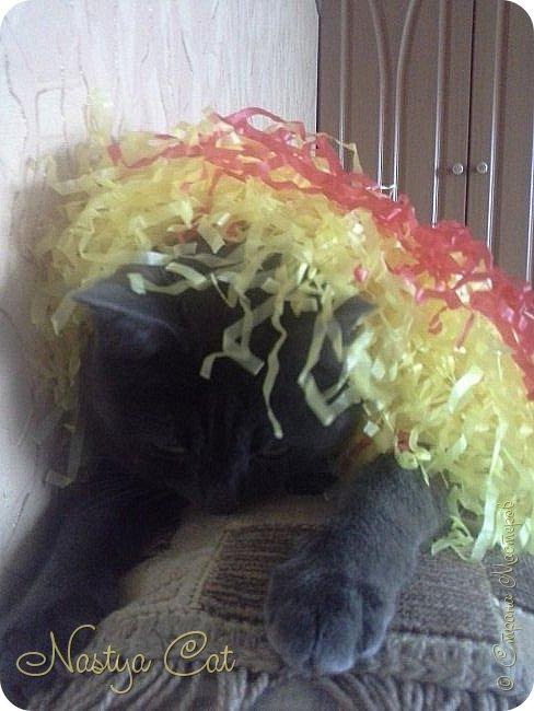 Мои любимые животные это кошки. Вот мой кот Тишка. Он серый с белыми пятнами на пузике. фото 3