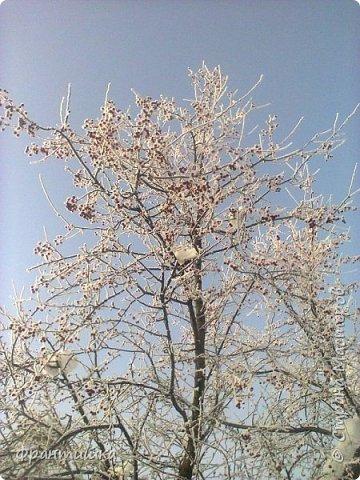 Чудесный зимний день. Морозная погода. На небе голубом сияет солнца круг. Под снегом сладко спит притихшая природа, И снежным серебром покрыто всё вокруг.  На улице бывать мне нравится в морозы; Прекрасных, светлых грёз душа моя полна, Когда стоят в снегу застывшие берёзы И снежная блестит повсюду белизна.  От солнечных лучей пушистый снег искрится, Белеет ярко гладь заснеженных полей; В такие дни в лесу приятно находиться, Увидеть невзначай там стайку снегирей...  Как огоньки, у них краснеют ярко грудки - Поэтому они видны издалека; А в полынье речной гурьбой толпятся утки И ждут, когда от льда очистится река.  Чудесный зимний день. Морозная погода, Под башмаками снег от холода скрипит; С младенчества влюблён я в это время года, Когда в холодной мгле природа сладко спит. (М. Крюков)  фото 20