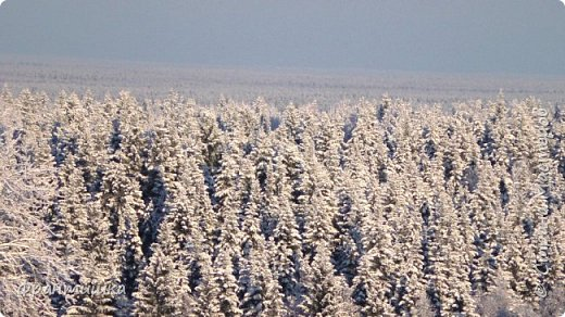 Чудесный зимний день. Морозная погода. На небе голубом сияет солнца круг. Под снегом сладко спит притихшая природа, И снежным серебром покрыто всё вокруг.  На улице бывать мне нравится в морозы; Прекрасных, светлых грёз душа моя полна, Когда стоят в снегу застывшие берёзы И снежная блестит повсюду белизна.  От солнечных лучей пушистый снег искрится, Белеет ярко гладь заснеженных полей; В такие дни в лесу приятно находиться, Увидеть невзначай там стайку снегирей...  Как огоньки, у них краснеют ярко грудки - Поэтому они видны издалека; А в полынье речной гурьбой толпятся утки И ждут, когда от льда очистится река.  Чудесный зимний день. Морозная погода, Под башмаками снег от холода скрипит; С младенчества влюблён я в это время года, Когда в холодной мгле природа сладко спит. (М. Крюков)  фото 10