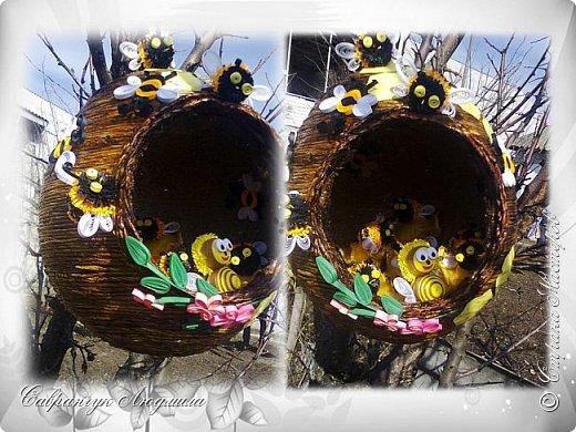 Всем привет хочу познакомить вас, со своими маленькими пчелками.  фото 5