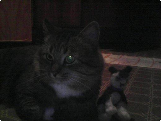 """Это кот из """"Котов Воителей"""" Костяк, который побывал на уроке Общество знания,с сочинением про рукоделие. фото 2"""