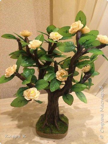 розовое дерево фото 7