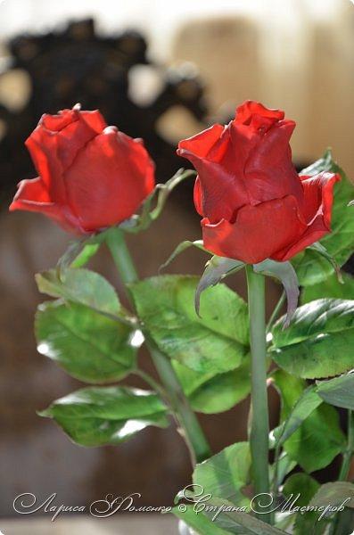 Благодаря Инне Голубевой, которая открыла , что с помощью пищевого красителя, можно добиться такого цвета, и с большой благодарностью, к одному хорошему человеку, который мне его подарил, родились эти розы!!! Спасибо девочки!!! Сразу отмечу, краситель использовался порошковый пищевой, который хранился еще с 90-х годов. фото 1