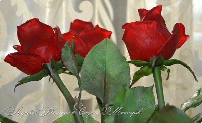 Благодаря Инне Голубевой, которая открыла , что с помощью пищевого красителя, можно добиться такого цвета, и с большой благодарностью, к одному хорошему человеку, который мне его подарил, родились эти розы!!! Спасибо девочки!!! Сразу отмечу, краситель использовался порошковый пищевой, который хранился еще с 90-х годов. фото 4