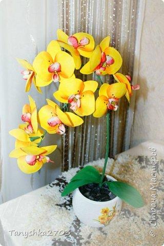 Желтая орхидея фото 1