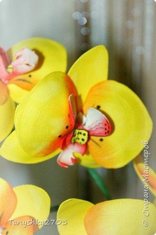 Желтая орхидея фото 2