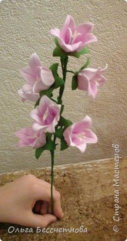 Полевые цветы и не только фото 5