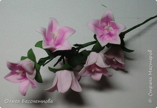 Полевые цветы и не только фото 3