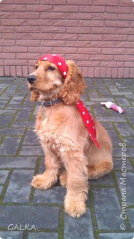 Всем привет, хочу поделиться своей радостью... ну, и конечно, похвастаться своим подарком на 8-е Марта, который сделали мне мои самые любимые в мире  мужчины Знакомьтесь, это английский кокер - спаниель СИМА ( СИМОНА) - самая лучшая, самая красивая и самая умная ( потому, что моя :)) собака в мире ( ну-у, во Львове - это точно :)) фото 5