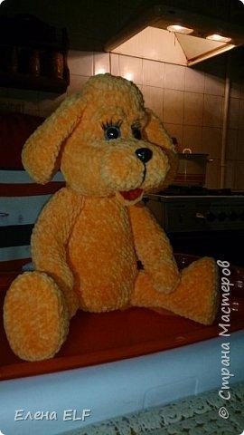 Рыженькая собачка Лизонька фото 3
