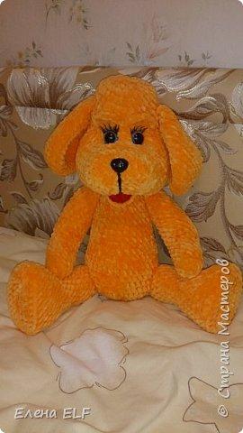 Рыженькая собачка Лизонька фото 4
