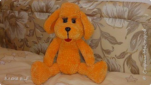Рыженькая собачка Лизонька фото 1