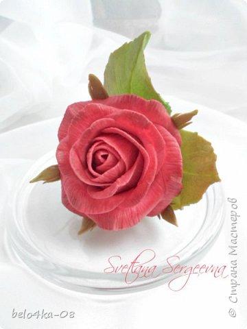 роза в стекле фото 2