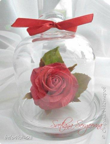 роза в стекле фото 3