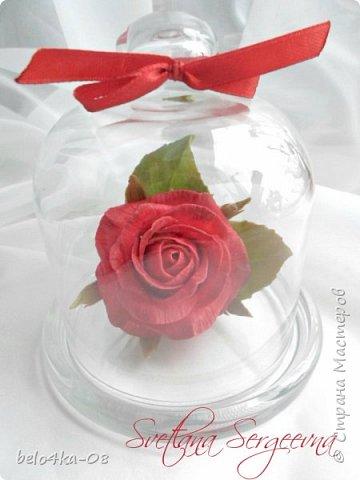 роза в стекле фото 5