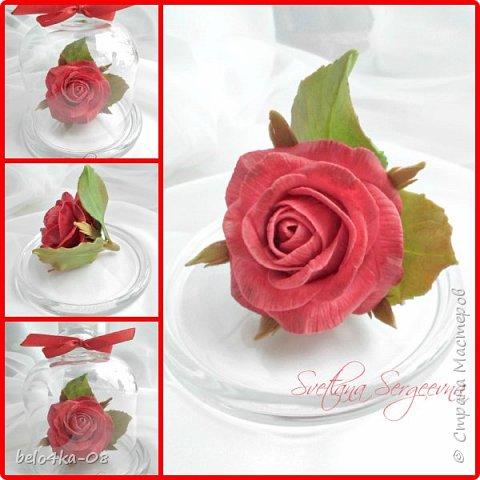роза в стекле фото 1