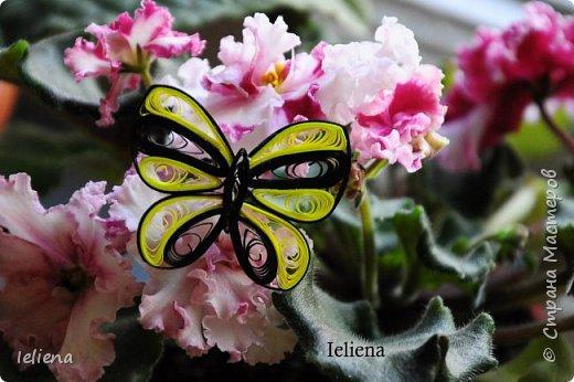 Весна разбудила первых бабочек ))) фото 1