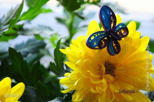 Весна разбудила первых бабочек ))) фото 3