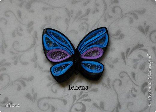 Весна разбудила первых бабочек ))) фото 5