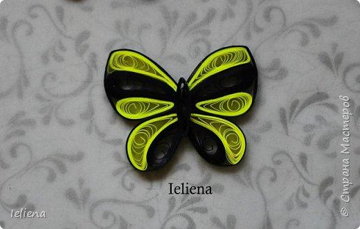Весна разбудила первых бабочек ))) фото 6