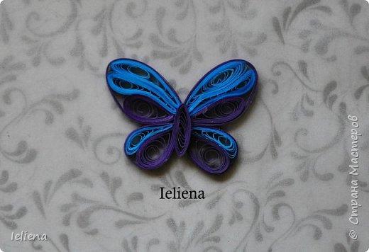 Весна разбудила первых бабочек ))) фото 7