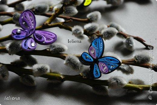 Весна разбудила первых бабочек ))) фото 10