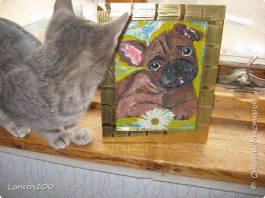 Добрый день,мои дорогие!Потянуло меня к портретам,правда,он-милашка?Забавный милый мопс,а то мне своих собак мало...) Я маюсь от усталости иль лени И просто оттого. Что мало сплю. Но пёс мой утыкается в колени И говорит: А я тебя люблю!  Я бьюсь над вечным бытовым вопросом,  Когда ресурсы подошли к нулю, Но пёс мой прикоснется мокрым носом И говорит: А я тебя люблю...  Кто грезит о богатстве, кто о власти,  Все тянутся к рулю или к рублю. А у меня моё простое счастье. Хвостатый мой, как я тебя люблю! Анастасия Ч. фото 5