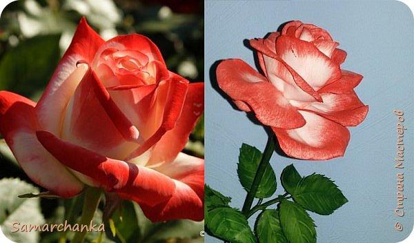 "Роза ""Императрица ""ФАРАХ"" фото 3"