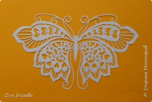 Бабочка фото 6