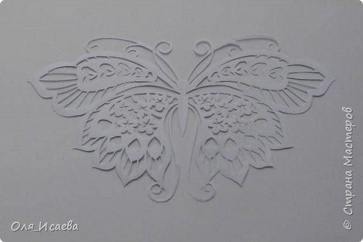 Бабочка фото 7