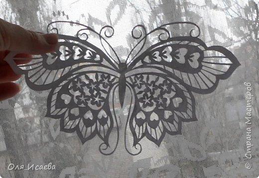 Бабочка фото 8