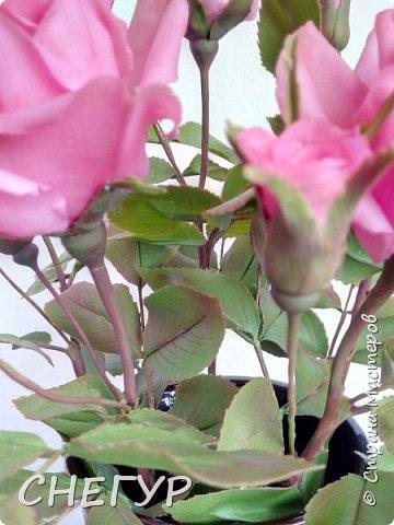 Привет СТРАНА!  С прошедшим праздником весны!  Поздравляю женщин с прошедшим праздником 8 марта! Здоровья, мирного неба и весеннего настроения!!! Лучше поздно чем ни когда.   Много новых работ появилось. Вот и у меня на лепилось ..... Заказ мамы - розы Топаз. Ну уж Топаз не Топаз - что вышло, то вышло. фото 6