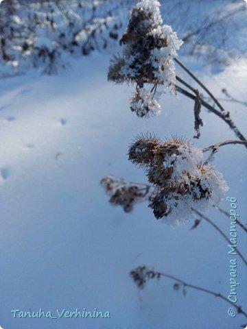 Здравствуйте! Сегодня я хочу поделиться с вами зимними фотографиями, которые были сделаны в конце февраля или начале марта.  Белая береза Под моим окном Принакрылась снегом, Точно серебром.  На пушистых ветках Снежною каймой Распустились кисти Белой бахромой.  И стоит береза В сонной тишине, И горят снежинки В золотом огне.  А заря, лениво Обходя кругом, обсыпает ветки Новым серебром.                                        (Есенин С.) фото 6