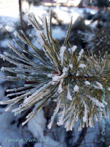 Здравствуйте! Сегодня я хочу поделиться с вами зимними фотографиями, которые были сделаны в конце февраля или начале марта.  Белая береза Под моим окном Принакрылась снегом, Точно серебром.  На пушистых ветках Снежною каймой Распустились кисти Белой бахромой.  И стоит береза В сонной тишине, И горят снежинки В золотом огне.  А заря, лениво Обходя кругом, обсыпает ветки Новым серебром.                                        (Есенин С.) фото 9