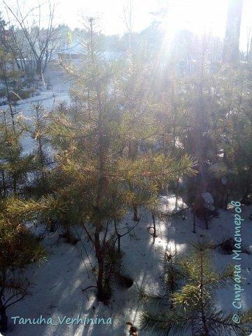 Здравствуйте! Сегодня я хочу поделиться с вами зимними фотографиями, которые были сделаны в конце февраля или начале марта.  Белая береза Под моим окном Принакрылась снегом, Точно серебром.  На пушистых ветках Снежною каймой Распустились кисти Белой бахромой.  И стоит береза В сонной тишине, И горят снежинки В золотом огне.  А заря, лениво Обходя кругом, обсыпает ветки Новым серебром.                                        (Есенин С.) фото 14