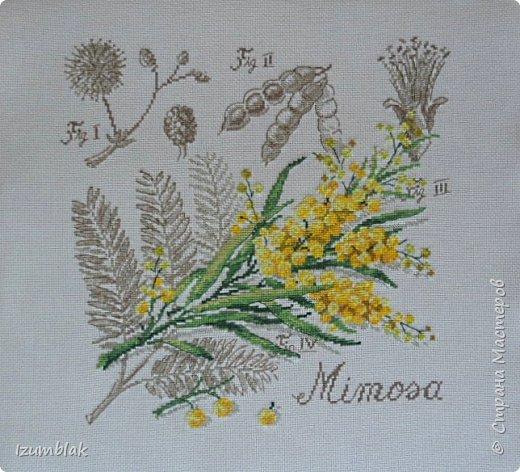 """""""Мимоза"""" от Véronique Enginger"""