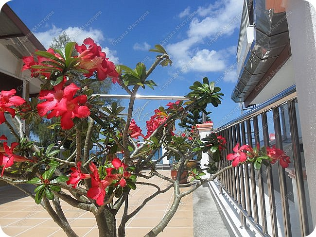 Здравствуйте! Предлагаю вам окунуться в атмосферу экзотики, вечного лета  и улыбок ! Да, это  Таиланд. А место, где мы насладимся отдыхом - о.Пхукет, его западное побережье , - уютные и относительно чистые заливы и пляжи Патонга.  Для нас отдых - прежде всего познавательные экскурсии и  наслаждение природой.    Андаманское море, Индийский океан...Добро пожаловать на нашу маленькую экскурсию! фото 5