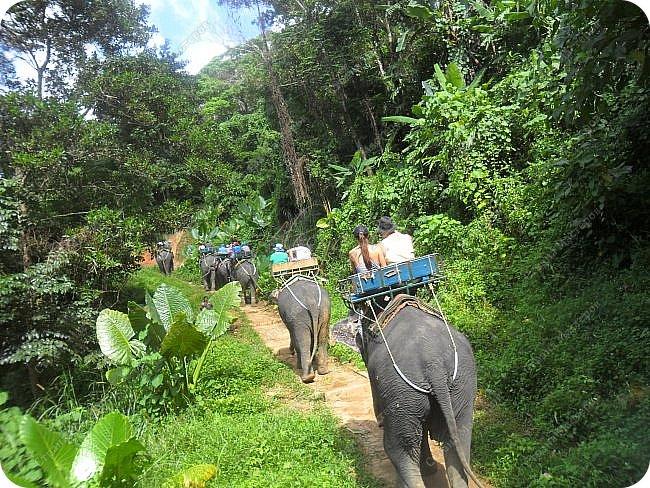 Здравствуйте! Предлагаю вам окунуться в атмосферу экзотики, вечного лета  и улыбок ! Да, это  Таиланд. А место, где мы насладимся отдыхом - о.Пхукет, его западное побережье , - уютные и относительно чистые заливы и пляжи Патонга.  Для нас отдых - прежде всего познавательные экскурсии и  наслаждение природой.    Андаманское море, Индийский океан...Добро пожаловать на нашу маленькую экскурсию! фото 10