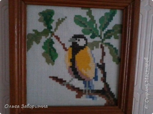 Коллекция птиц. фото 4
