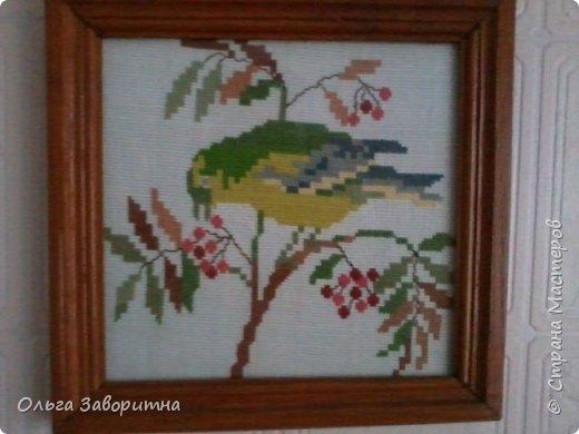 Коллекция птиц. фото 1