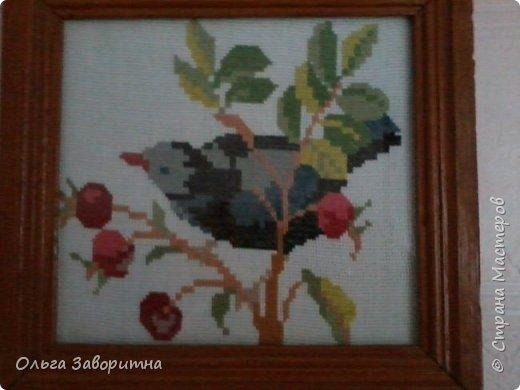 Коллекция птиц. фото 2